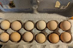 Guinea eggs in Camp Lejeune, North Carolina