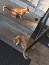 2free kittens - with cat tower, litter box and scratch post in Camp Lejeune, North Carolina