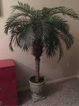 artificial palm in Kingwood, Texas