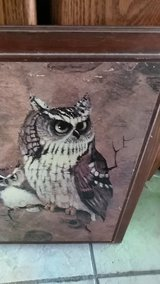 owl picture in Fort Leonard Wood, Missouri