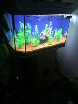 fish tank big in Ramstein, Germany