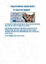 CATS ADOPTIONS in San Clemente, California