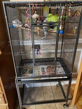 Bird cage with English Budgie in Byron, Georgia