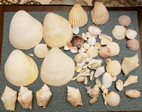 REDUCED Seashells in 29 Palms, California