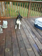 Free dog in Dover, Tennessee