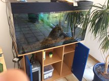 200 liter/ 50 gallon fish tank with external filter, decoration and fish (if wanted) in Wiesbaden, GE
