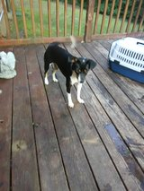 Free female puppy in Dover, Tennessee