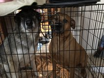 Re-home dogs in Fort Campbell, Kentucky