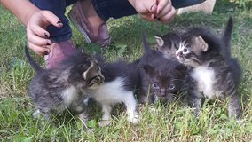 free kittens to a good home in Fort Leonard Wood, Missouri