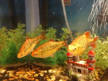 3 fish to good home in Camp Pendleton, California