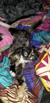 Anyone have kittens in Yucca Valley, California
