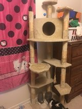 cat tree in Leesville, Louisiana