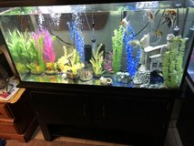 65 gal with tropicals in Lawton, Oklahoma
