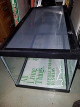 Perfect Habitat and Accessories for your Bearded Dragon in Lockport, Illinois