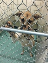 Free Adoptions, Pasadena Animal Shelter in League City, Texas