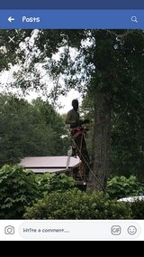 Tree services in Beaufort, South Carolina