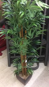 Bamboo Tree (New) in Fort Leonard Wood, Missouri