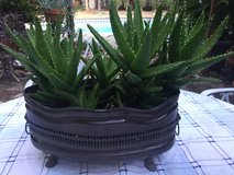 Succulents in vintage copper pot in Vacaville, California