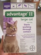 New ADVANTAGE ? for large cat in Fairfield, California