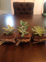 Wooden Holder for succulents in Joliet, Illinois