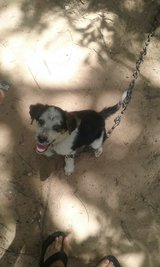 Male Puppy in Cleveland, Texas