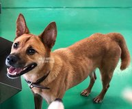 These Dogs Urgently Need HOmes or They will be Put Down in Okinawa, Japan