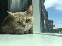 Free Cat in Nashville, Tennessee