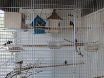 Finch cage and supplies in Camp Pendleton, California