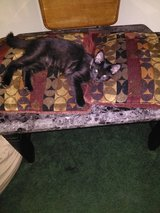 male and female kitten in Fort Campbell, Kentucky