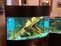 100 gallon corner aquarium in Fort Leonard Wood, Missouri