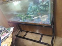 55 gal tank & stand in Fort Leonard Wood, Missouri