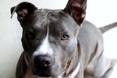 Sweet Girl Rescued From Being Put To Sleep in Fort Sam Houston, Texas