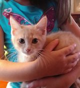 Kitten in Fort Campbell, Kentucky