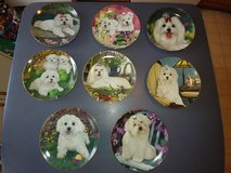 Maltese Collector Plates in Clarksville, Tennessee