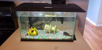 Free fish and tank in Naperville, Illinois