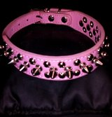 Pink Studded Cat Collar in 29 Palms, California