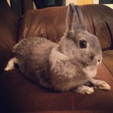 Bunny looking for a good home! in Spangdahlem, Germany