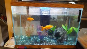 30 gal fish tank with filter and light in Glendale Heights, Illinois