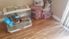 Free pet rat, cage, food, supplies, etc. in Vacaville, California