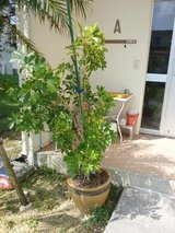 Potted plant in Okinawa, Japan