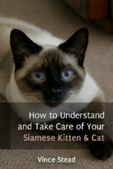 How To Understand and Take Care of Your Siamese Kitten & Cat in San Ysidro, California