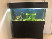 55 gal fish tank in Travis AFB, California