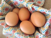 FRESH EGGS in Beaufort, South Carolina