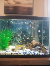 Fish tank in Clarksville, Tennessee
