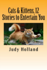 Cats & Kittens, 12 Stories to Entertain You! in San Ysidro, California