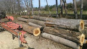 Hardwood logs and 2 year old milled boards in Wilmington, North Carolina