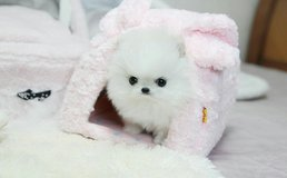 Beautiful Pomeranian puppies Available in Tinker AFB, Oklahoma