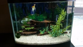 full 30 gal fish tank, stand and supplies in Baytown, Texas