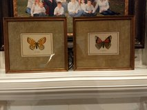 Butterfly Prints in Kingwood, Texas