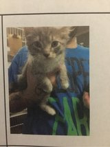 Free cat in Clarksville, Tennessee